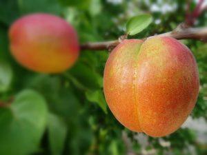fertilizantes y fitosanitarios en Murcia