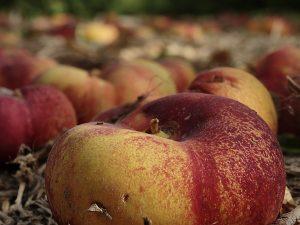 productos agrícolas de murcia