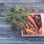 ¿Cómo germinar semillas para cultivar hortalizas?