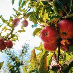 5 consejos para que tus árboles frutales crezcan sanos y fuertes