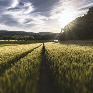 ferretería agrícola