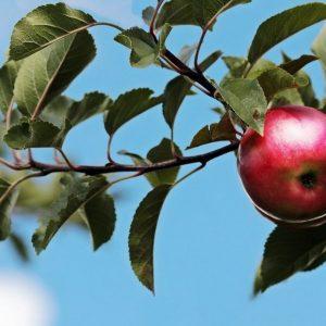 Frutales en invierno: Como protegerlos