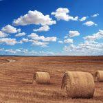 Terrenos idóneos para el cultivo en Murcia