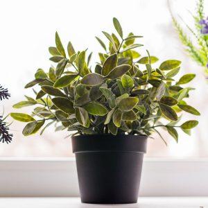 plantas-de-interior-cuidados-murcia