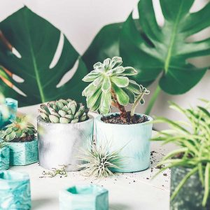 cuidar-plantas-en-invierno