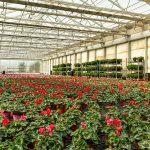 Trucos para el cultivo de interior en Murcia