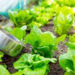 ¿Qué fertilizantes utilizar con la llegada del calor?